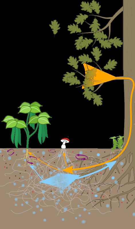 Rete di micorrize. Immagine basata su Réseau mycorhizien et microbiote du sol, di Salsero35-Nefronus, CC BY-SA 4.0 via Wikimedia Commons
