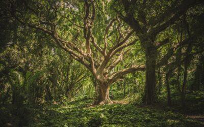 Il frutto e i nomi. Un estratto da Dopo l'Eden